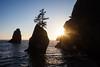 Seastacks in Sundown Sunlight - Shi Shi Beach
