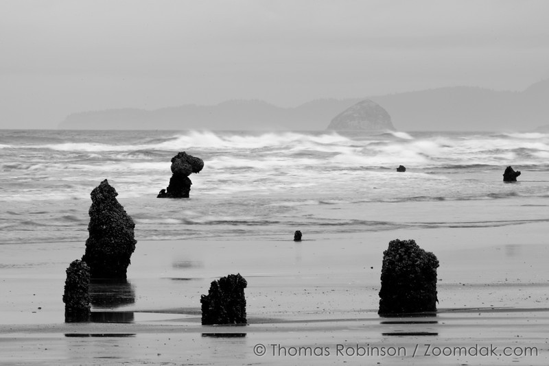 The stumps of the the ghost forest stick up at low tide in Neskowin, Oregon with Haystack Rock of Cape Kiwanda in the background. <br /> <br /> Though nobody knows the origins of the ghost forest, it is theorized that sometime within the last 2,000 years a cataclysmic earthquake caused this chuck of forest to drop to sea level. Then preserved by sand and mud, they are around today rather than naturally eroding.