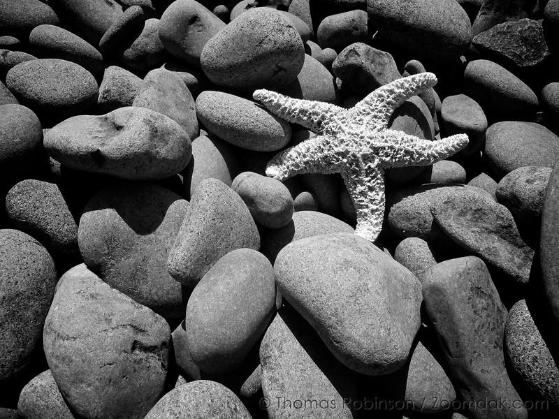 Starfish-on-the-Rocks