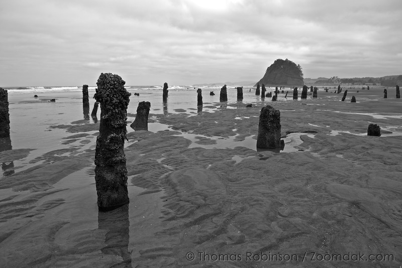 The stumps of the the ghost forest stick up at low tide in Neskowin, Oregon. <br /> <br /> Though nobody knows the origins of the ghost forest, it is theorized that sometime within the last 2,000 years a cataclysmic earthquake caused this chuck of forest to drop to sea level. Then preserved by sand and mud, they are around today rather than naturally eroding.