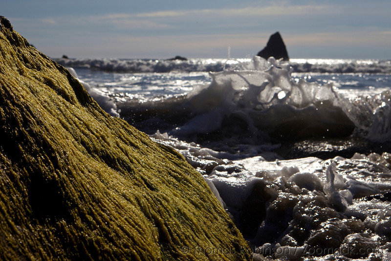 Seascape details: Algea, waves and rocks. The shores of the Pacific Ocean.