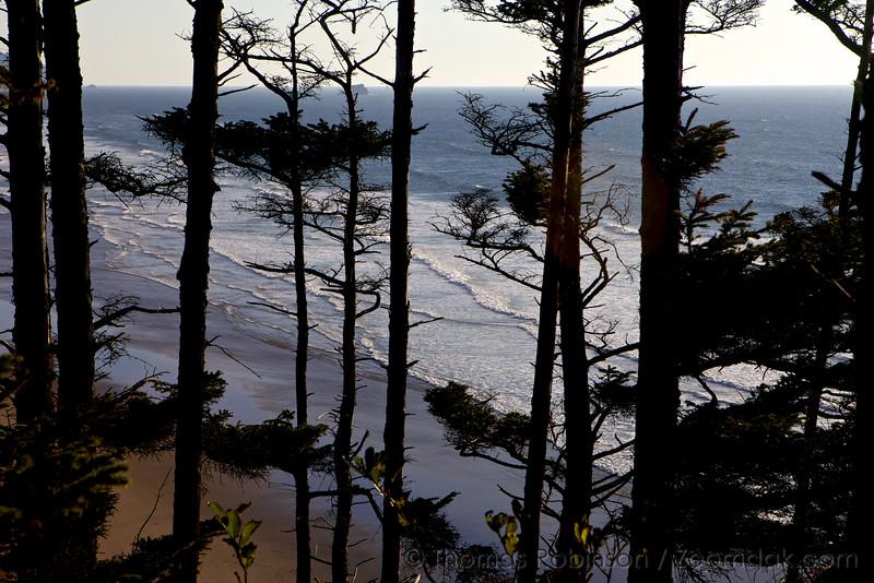 Ocean thru the Trees
