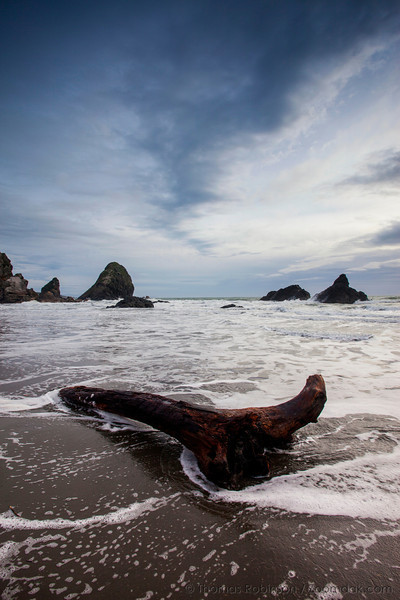 A piece of driftwood catches foam on the tide edge at Harris Beach State Park, southern Oregon Coast.