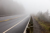 Highway 101 in the Fog