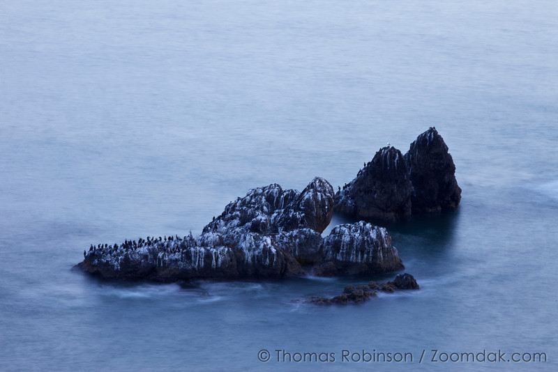 The sea-lion rocks below Ecola Point are coated with bird guano from the cormorants (Phalacrocorax pelagicus)