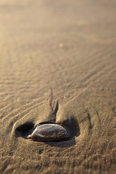 A single jellyfish washed up on the sand.
