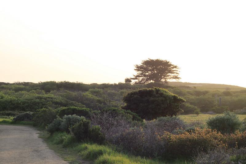 California Central Coast-Andrew Molera State Park