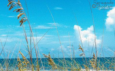 tall grass on beach-0707