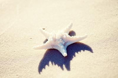 Gulf Shores 063
