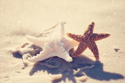 Gulf Shores 066