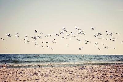 Gulf Shores 118 2