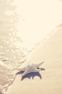 Gulf Shores 054