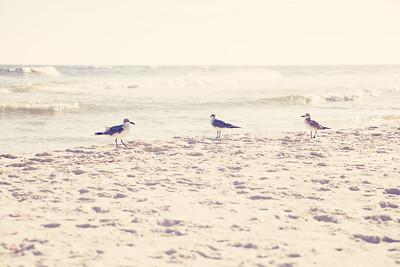 Gulf Shores 030