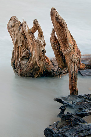 Beaches and Driftwood