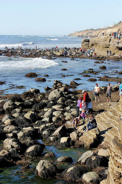 Tide Pool Fun