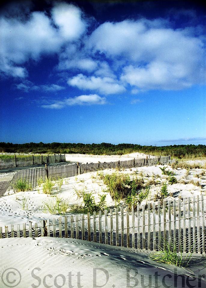 Cape Henlopen Dunes, DE.