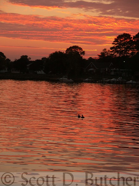Swimming Towards Sunset, Indian River Bay, DE.