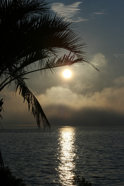 Destin FL Palm Sunrise - Please sign my guestbook and leave your comments.  Thank you!