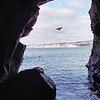 Flight Of The Cormorant. (La Jolla Sea Cave).