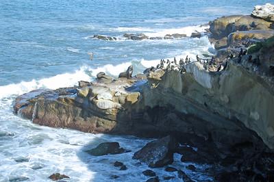 Seals, Sea Gulls, and Cormorants