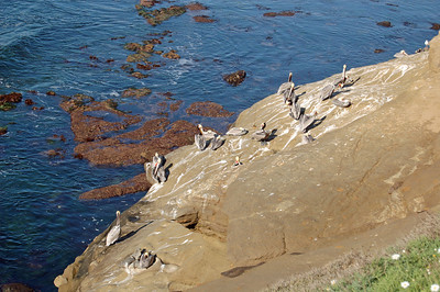 Pelican Rookery and Banos