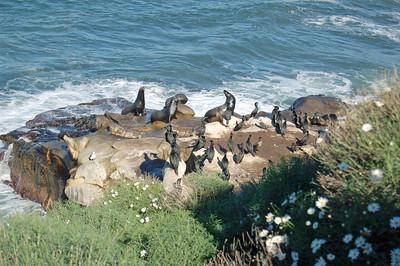 Three Bull Seals