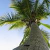 Palm tree 3 jpg