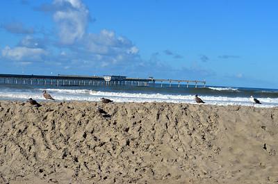 12 Foot San Berms protect the Beach