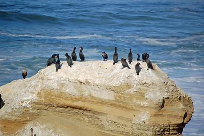 Cormorants Litter Box