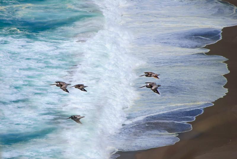 Gliding Over Beach(