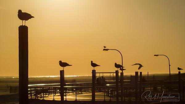 Gulls on poles