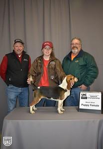 2019 Hunting Beagle Nationals