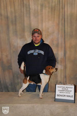 Beagle World Championship