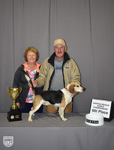 Hunting Beagle World 6th Place