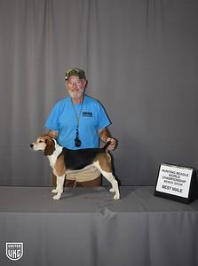 Hunting Beagle World Best Male