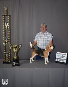 Hunting Beagle World Show Champion