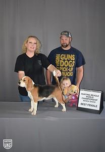 Hunting Beagle World Best Female