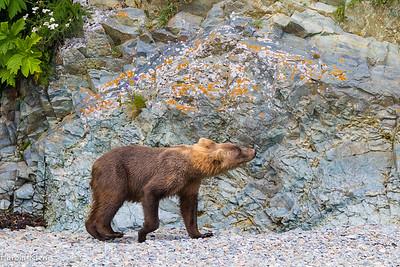 Bear Boat 2017-67656