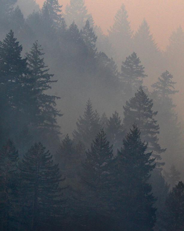 . Smoke shrouds the forest around Las Cumbres Road near the Bear Fire Wednesday.. (Shmuel Thaler -- Santa Cruz Sentinel)