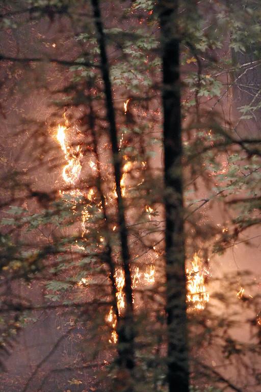 . Flames from the Bear Fire creep up a steep hillside along Bear Creek Canyon Road in the Santa Cruz Mountains east of Boulder Creek ealry Tuesday. (Dan  Coyro -- Santa Cruz Sentinel)