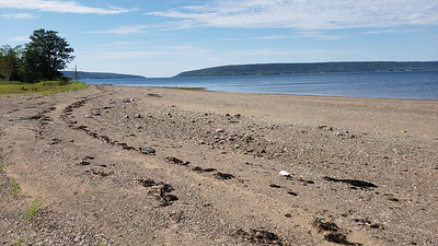 Beach along the north shore of island. At low tide there are extensive mudflats surrounding the island. Important for migrating shorebirds.