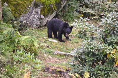 Baby Bear 3