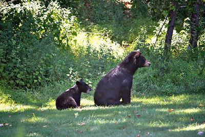 Mama Bear & Baby 3