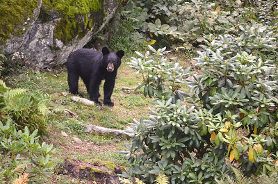 Baby Bear 5