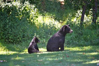 Mama Bear & Baby 2
