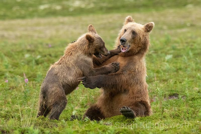 let's wrestle mom