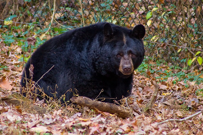 Bear Hollow Wildlife Trail