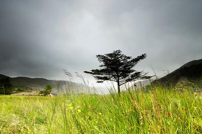 Lone Tree-IMG_6380