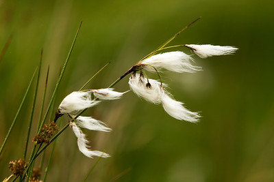 Blowing in the Wind-IMG_6552