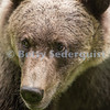 Ultra Close Brown Bear